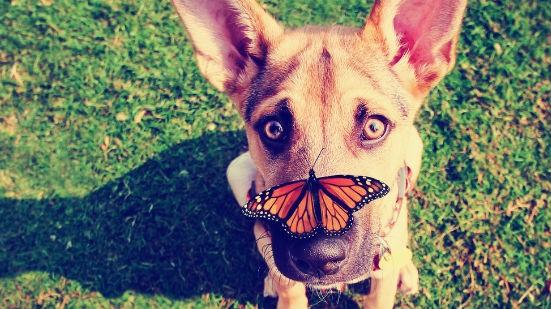 Cane con farfalla