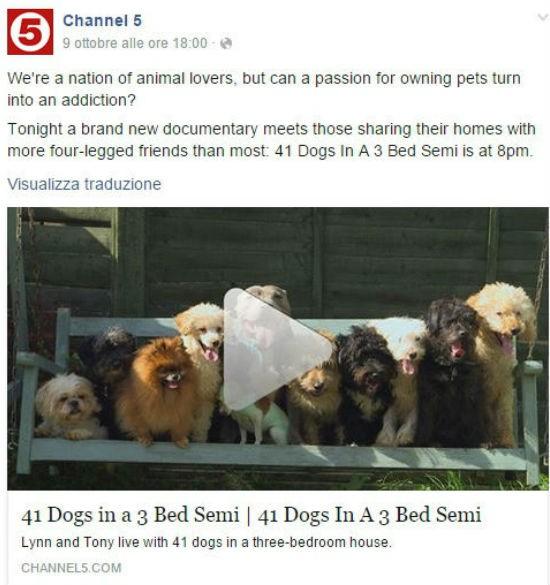 41 cani in casa