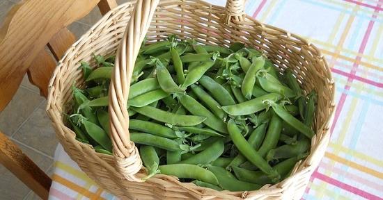 I piselli sono un legume consumato dall'uomo fin da epoche antiche