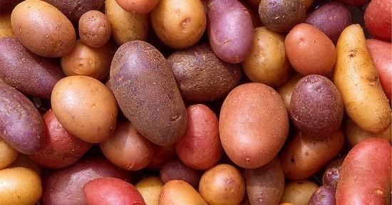 Le patate vengono prodotte in molte varietà diverse