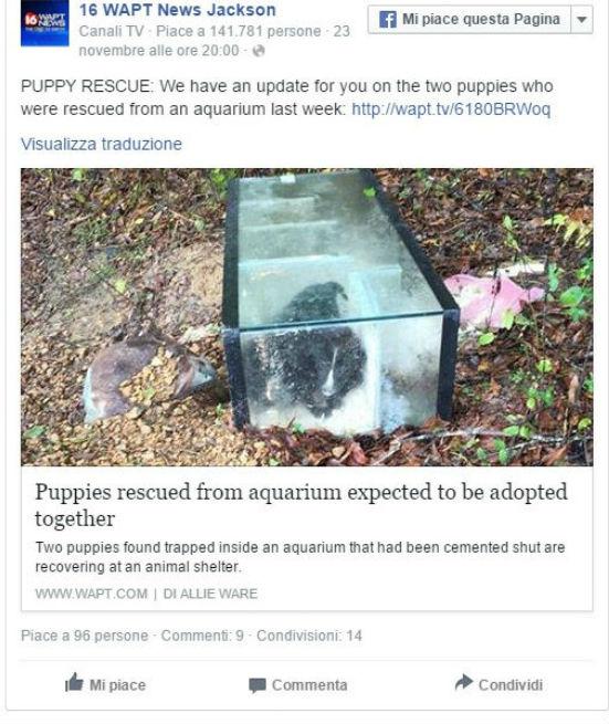 Cuccioli dentro acquario