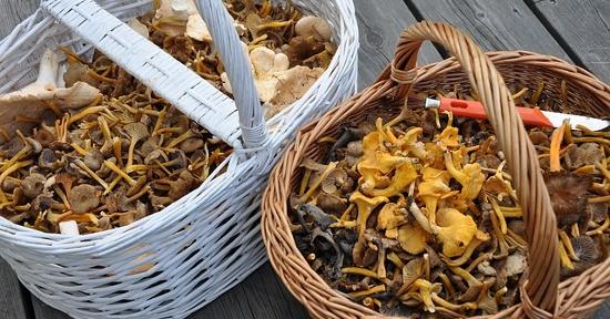 I funghi contengono circa il 90% di acqua e sono un'ottima fonte di fibra alimentare.