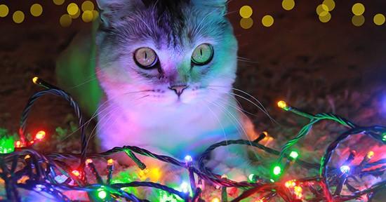 Gatto e luci natalizie