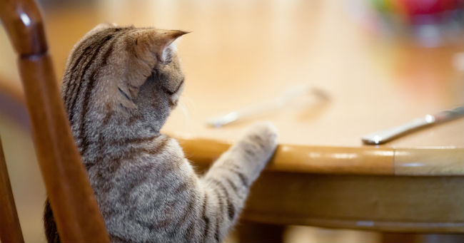 Cani e gatti come aiutarli quando perdono l 39 appetito for Cani giocherelloni