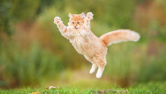 Gatti: comportamenti anomali e curiosi – GreenStyle