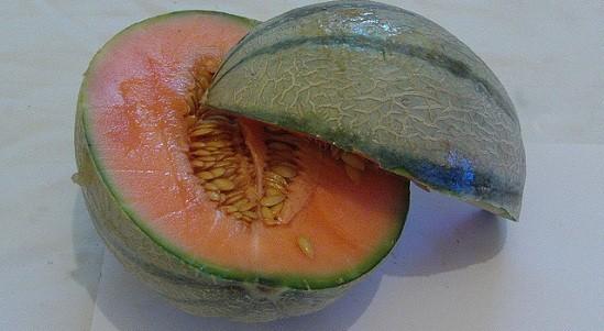 Canteloupe melon stylish shot