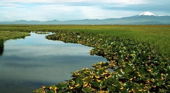 Lower Klamath Lake marsh