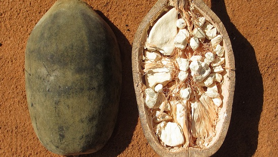 baobab - fruit