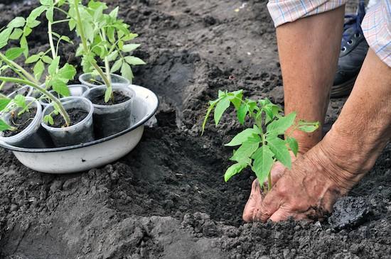 Giardinaggio, orto