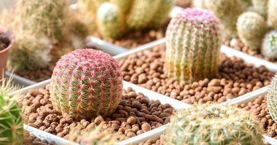 Piante grasse per l inverno for Piante per esterni resistenti
