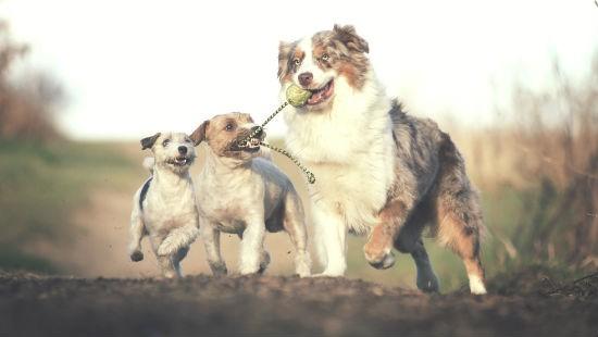 Cani comportamento