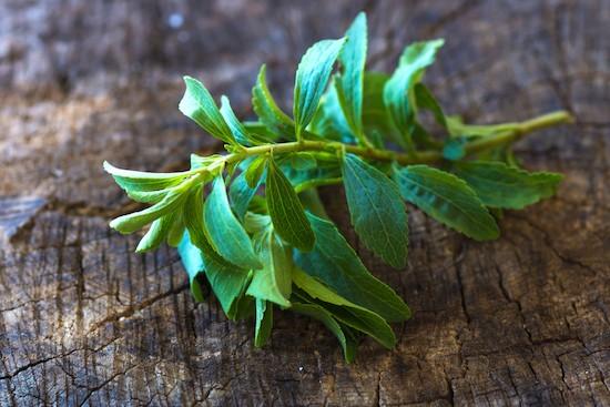 Stevia, rametto di foglie fresche