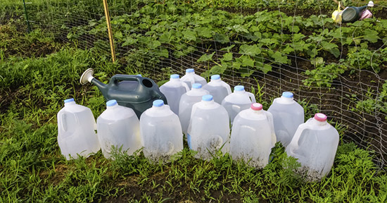 Orto come riciclare le bottiglie di plastica greenstyle for Talpe in giardino
