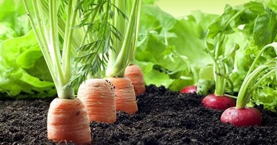 Fonti di Vitamina A: carote