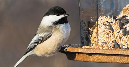 Mangiatoia per gli uccelli