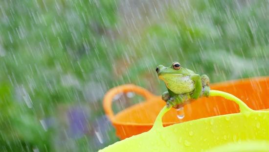 Rana e pioggia