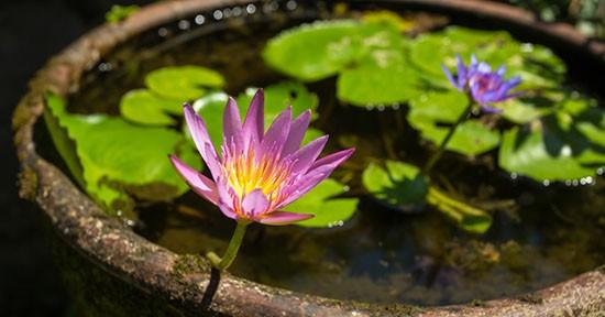 Vaso di fiori acquatici