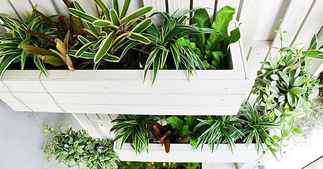 Giardini verticali fai da te: trucchi e consigli - GreenStyle