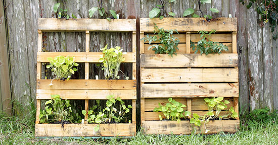 Giardino verticale con pallet
