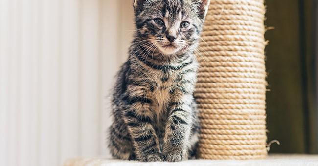 Mobili Per Gatti Fai Da Te : Tiragraffi fai da te come costruirne uno per il tuo gatto
