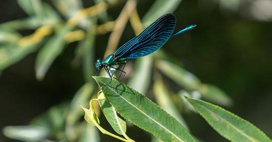 Fauna di Plitvice