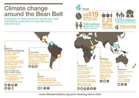 Infografica produzione di caffè