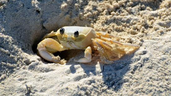 Granchio nella sabbia