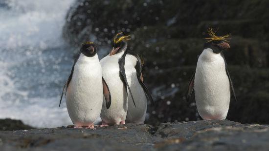Pinguino e mare