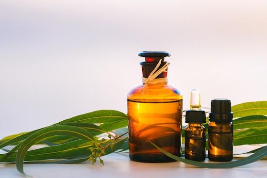 Eucalipto, olio essenziale