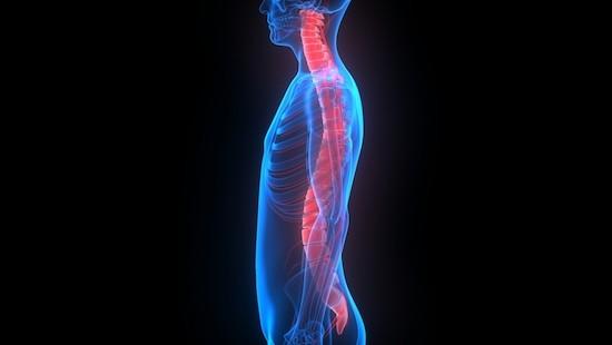 Apparato muscolo scheletrico