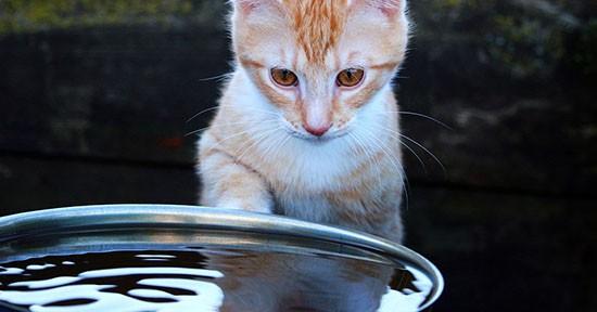 Gatto e acqua