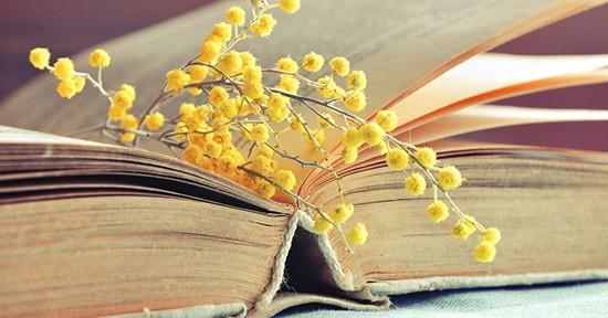 Mimosa nel libro