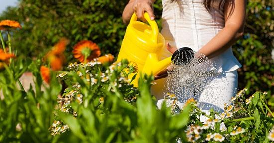 Bagnare i fiori