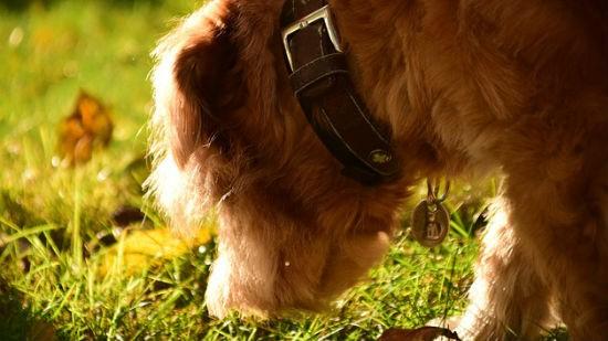 Cani autunno2