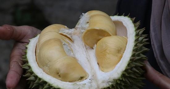 Durian exotic fruit