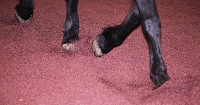 Pavimento In Gomma Per Box Cani : Gomma da pneumatici fuori uso risorsa per la salute dei cavalli