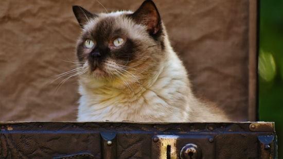 Gatto valigia