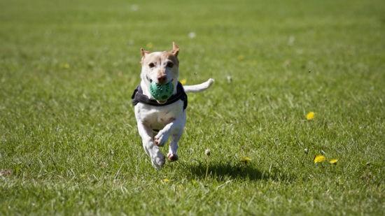 Cane e attività