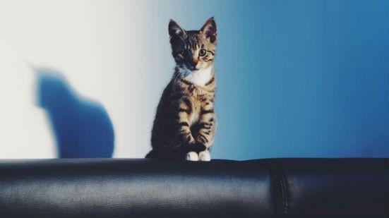 Gatto e ombra