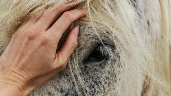 Cavallo carezza