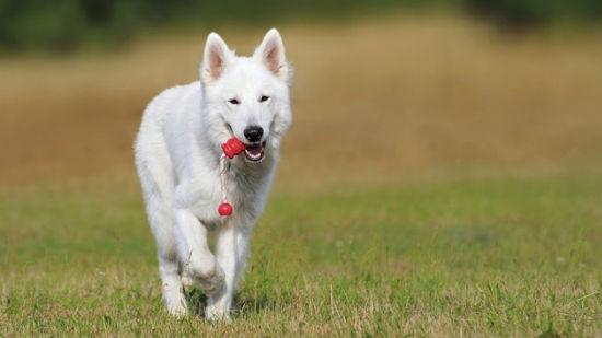 Cani e gioco