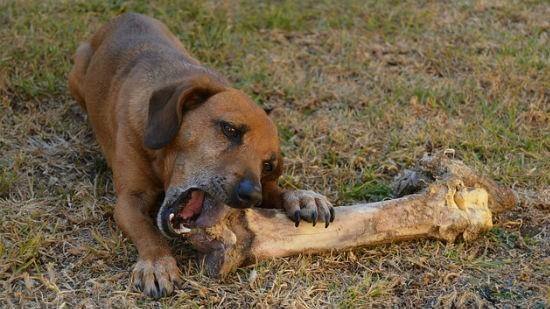 Cane e ossa