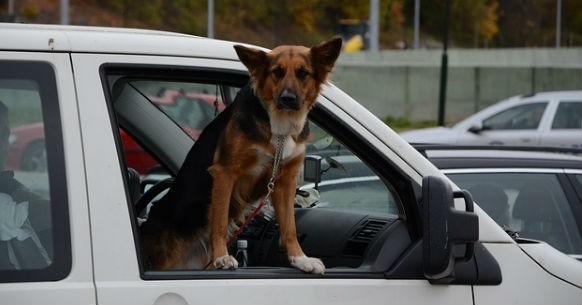 Cane macchina