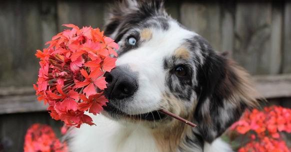 Cani e fiori