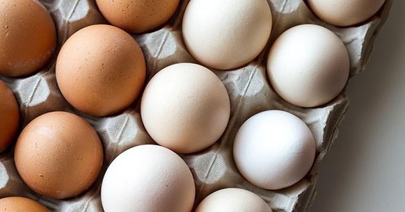 Guscio uovo