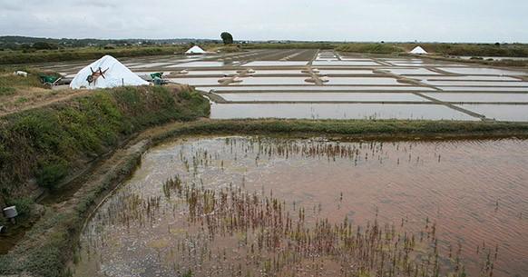 Saline in Francia