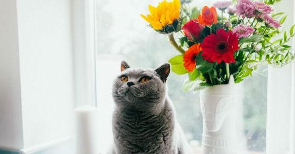 Gatto e fiori