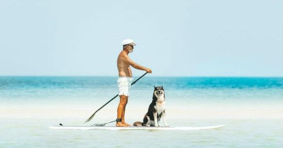 Cane e sole