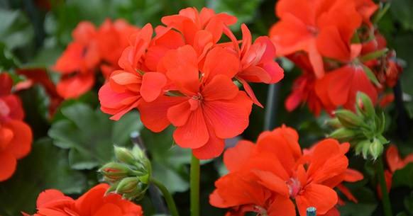 Tipi di fiori autunnali da giardino per colorare le tue giornate