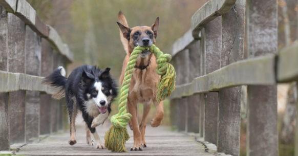 Cani e corda